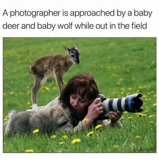 Animal Memes Of The Day 32 Pics – Ep58 #animalmemes #memes