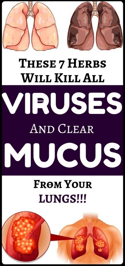 These natural organic herbs will destroy viruses and clear mucus from your lungs…