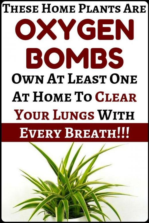 These plants are oxygen bombs. Clear your lungs with every breath you take – hea…