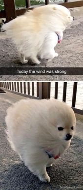 25 Pics Funny Dog Memes to Cheer You Up on a Bad Day