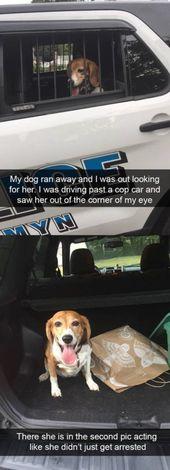 Dog Memes Of The Day 32 Pics – Ep30 #dogs #dogmemes #memes#lovelyanimalsworld