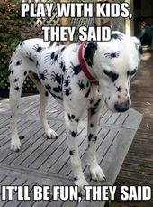 Funny Animal Memes Of The Day – 52 Pics Ep21 – Lovely Animals World