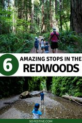 Redwood National Park With Kids- Family Travel Tips