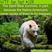 10 Crazy WTF Facts About Bears
