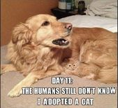 49 Funny Animal Memes To Leave You Laughing | CutesyPooh