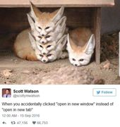 An Assortment Of Cute And Funny Animal Memes (30 Memes)