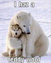 Animal Memes Of The Day 30 Pics – Ep26 #memes #animalmemes #lovelyanimalsworld – Lovely Animals World