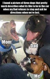 Dog Memes Of The Day 30 Pics – Ep29 #dogs #dogmemes #memes#lovelyanimalsworld – Lovely Animals World