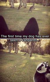 Funny Animal Picdump of The Day 206 (19 Photos) – humorside