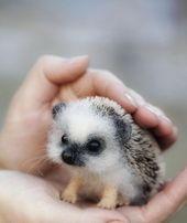 """Niedliche Tierbabys, die dich zum """"Aww"""" bringen – Tiere Blog"""