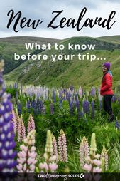 54 Things to Know Before Traveling in New Zealand |  Two Wandering Soles