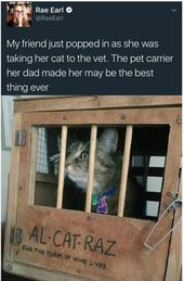 Funny Cat Memes Of The Day – 43 Pics Ep23 #cat #catmemes – Lovely Animals World
