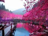 Lake Hot Pink Japan Ancient Trees Asia Beautiful Unique Art Poster Print 4×6 8.5×11 11×17 18×24 24×36 36×48