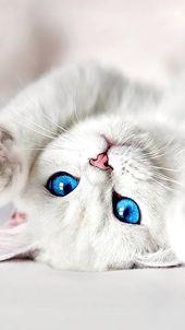 Lovey White Kitten Hd Wallpaper Download Hd In Link | Happy Day