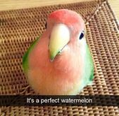 35+ Animal Snapchats That Are Impossible Not To Laugh At – AnimalsBay