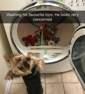 53 Funny Animal Memes To Brighten Your Day | CutesyPooh