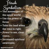 Hawk Spirit Animal