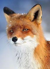 34 wunderschöne Tiere immer bereit zu posieren
