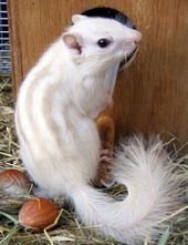 35 Rare Photos Of Albino Animals Like None You'll See In Real Life