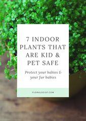 7 Indoor Plants That Are Kids & Pet Safe