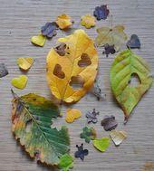 Make your own leaf wedding confetti | Biodegradable confetti