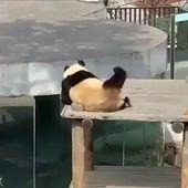 😂 Weekend Mood 😂 Funny Panda Meme