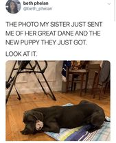 31 Wholesome Dog Posts That Provide Some Of That Tail-Wagging Cuteness