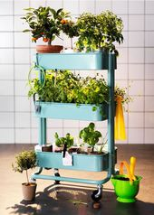 A gardening guide for small-space dwellers