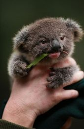 Cute Baby Animals That Will Make You Go 'Aww' – Top5