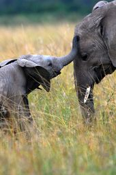Cute Mother and Baby Animal Pics | woman&home