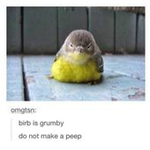 Dare You Not To Laugh At These Animal Memes