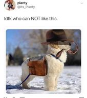 Fresh Animal Memes To Mix In Your Morning Coffee