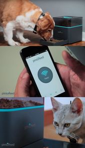 This Gadget Lets You Feed Your Pets From Your Smartphone