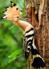 15 of the Most Beautiful Birds in the World (Pictures, Videos…) | JustBirding.com