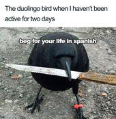 30 Hilarious Duolingo Memes