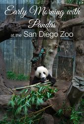 6 San Diego Zoo Tours that Elevate Your Visit – La Jolla Mom