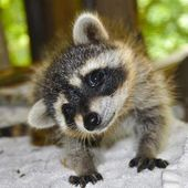Ridiculously Cute Baby Animals