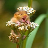 Roundup Of Cute Animal Memes & Images (44 Memes)