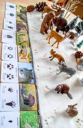 Animal Tracks Snow Playdough