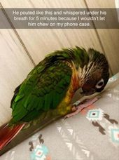 Funny Animal Pictures Of The Day Release 4 (72 Photos) – Page 6 of 8 – DrollFeed