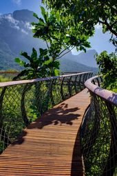 In Images: South Africa's Stunning Treetop Walkway