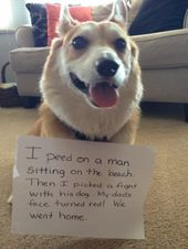 14 Naughty Puppers Who Got Rightfully (And Adorably) Shamed