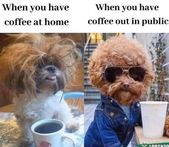 Perfect Match: Morning Coffee And Fresh Animal Memes Is Always a Good Idea