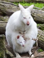 31 beautiful photos of completely white animals in the wild