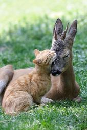 Even Farm Animals Know That Cats Make the Best Friends