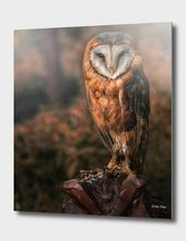 «barn owl» Aluminum Print by Detlef Knapp – Exclusive Edition from $74.9 | Curioos