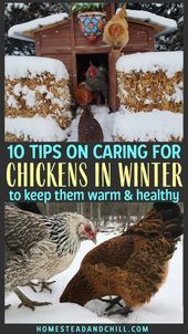 10 Tips on Caring for Chickens in Cold Winter Weather