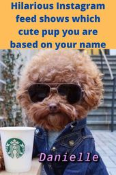 Hilarious Instagram feed shows which cute pup you are based on your name