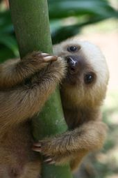 15 Adorable Sloths Here To Remind You To Slow Down And Enjoy Life