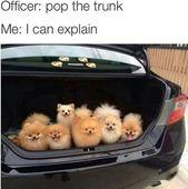 Squirrel-Chasin' Doggo Memes At Your Service (34 Dog Memes)